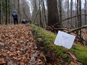 cesta-pralesem-na-zakove-hore