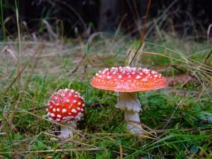 houba-kratka-u-snezneho-chko-zdarske-vrchy-jana-2