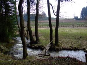 udolim-losenickeho-potoka
